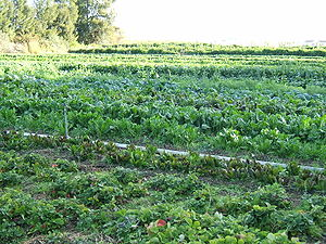 Organic cultivation of mixed vegetables on an ...