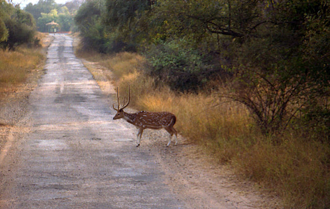 Wildlife spotted on a morning game drive in Sa...