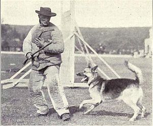 Police dog training from 1915