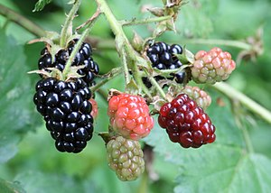 WDNR Outdoor Report: Water Levels and Berry Season