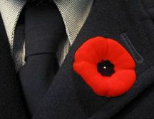English: A remembrance poppy from Canada, worn...