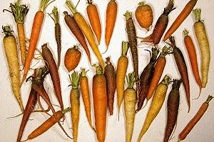 Carrot diversity