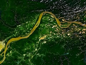 The Amazon River flowing through the rainforest