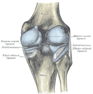 Capsule of right knee-joint (distended). Poste...