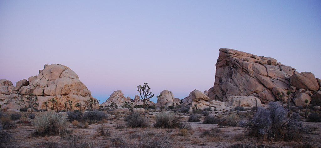 Joshua Tree - Cyclops + Potato Head - Sunrise