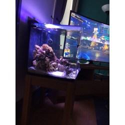 Small Crop Of Aquarium Safe Paint