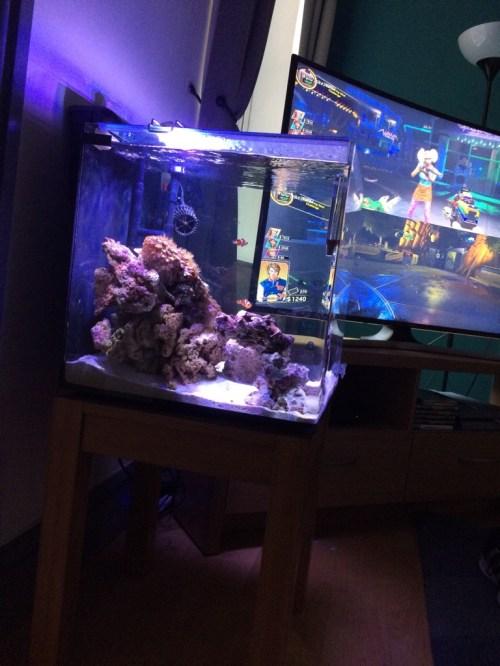 Medium Of Aquarium Safe Paint