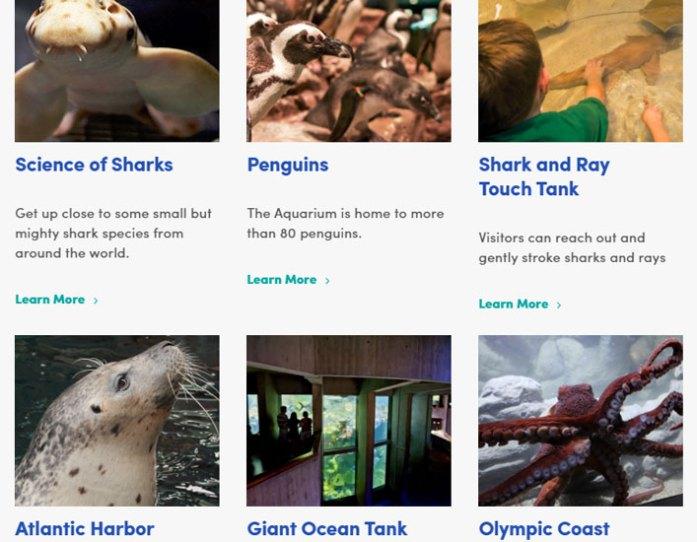 new-england-aquarium