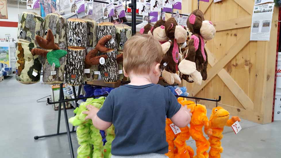 indoor fun runnings and pet store (7)