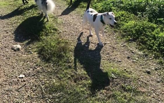 El adiestramiento como obligación para el bienestar animal y su relación con el tocino y la velocidad