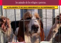 FINALIZADA LA VI CAMPAÑA DE RECOGIDA DE MANTAS Y ENSERES PARA LAS PROTECTORAS