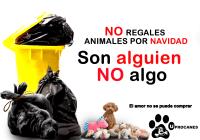 SOMOS ALGUIEN NO ALGO! NO REGALES ANIMALES POR NAVIDAD!