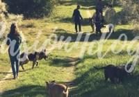 NUEVOS DESCUENTOS PARA SOCIOS: Pasion4dogs-educación respetuosa