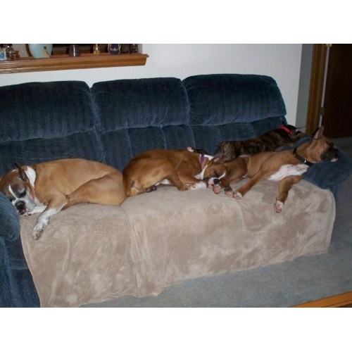 Medium Crop Of Do Boxers Shed