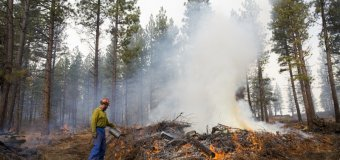 Oregon Forest-Thinning Wildfire Project Saved Homes but Highlights Obstacles