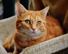 cat-1044772__180