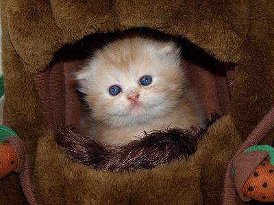 cat-1152812_640