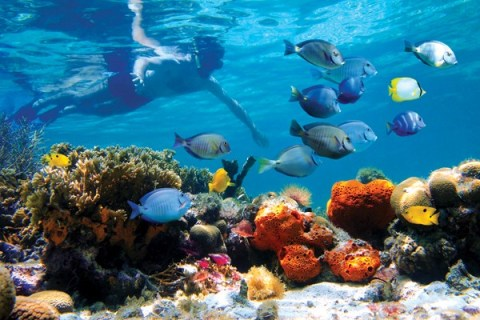 snorkel_crystalline_waters-un-cruise-panama