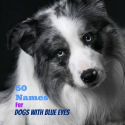 Small Of Southern Dog Names
