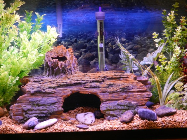 Avoid a cloudy fish tank and keep your water crystal clear by