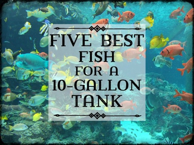 Find out which fish to choose for your 10 gallon tank, how many fish