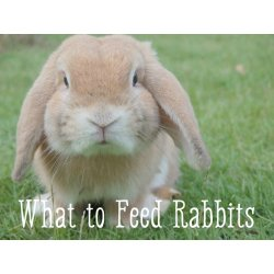 Enticing Bunny Care What Foods Do Rabbits Pelpful Can Cats Eat Iceberg Lettuce Do Cats Eat Romaine Lettuce houzz-03 Can Cats Eat Lettuce
