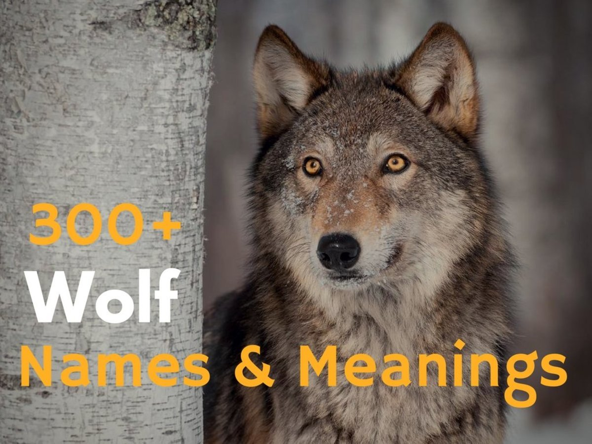State Wolf Names Meanings Hubpages Famous Wolf Names From Movies Famous Black Wolf Names bark post Famous Wolf Names