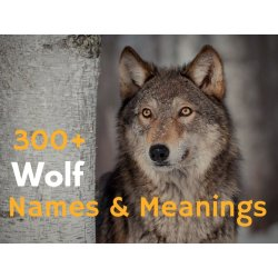 Small Crop Of Famous Wolf Names
