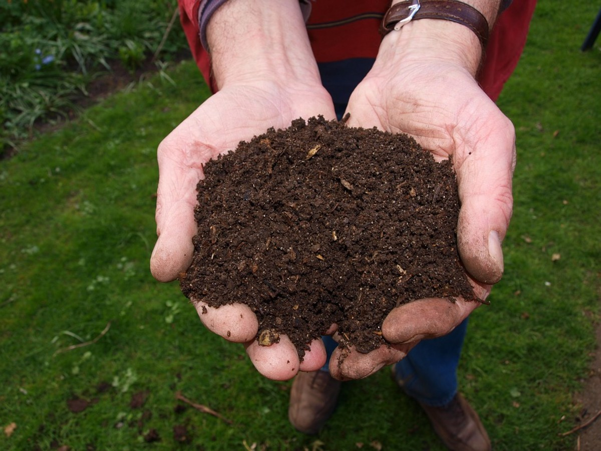 Engaging Compost Images Maggots Should You Use Black Sier Fly Larvae Or Red Wiggler Worms Dengarden Should You Use Black Sier Fly Larvae Or Red Wiggler Worms Compost Australia Maggots houzz 01 Maggots In Compost