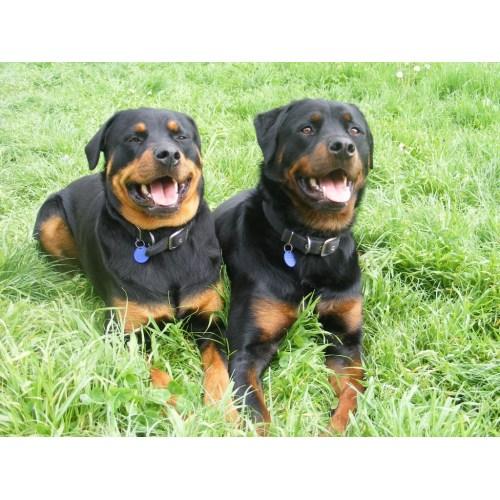 Medium Crop Of Excessive Panting In Dogs