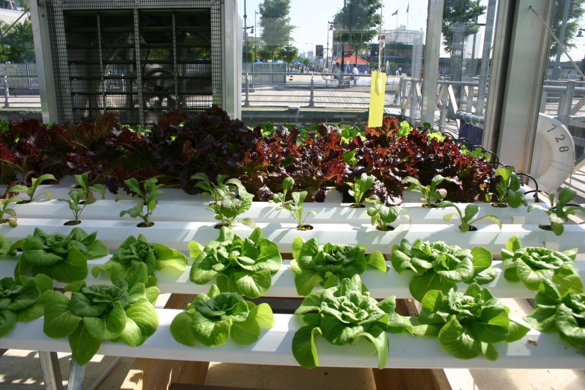 Fullsize Of Indoor Vegetable Garden Setup