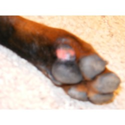 Small Crop Of Can You Put Neosporin On A Dog