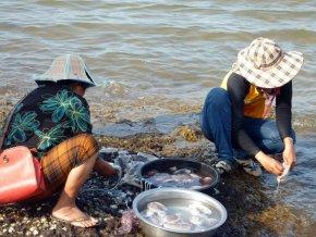 Kep - Nettoyage de sèches au marché aux crabes