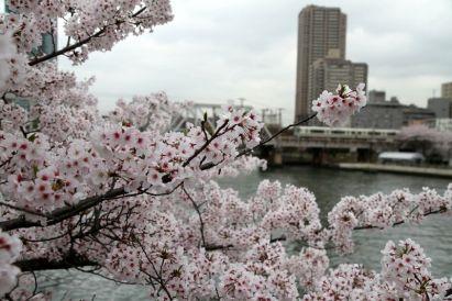 Des cerisiers en fleurs, un train, un immeuble : oui, c'est bien le Japon