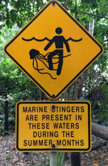 """Voici le """"petit"""" inconvénient de la région: les méduses-boîtes dont les brûlures peuvent être mortelles pour l'homme... Pas de baignade donc! :-("""