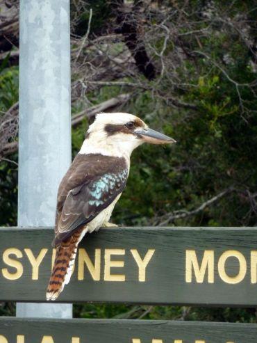 Une espèce inconnue parmi tant d'autres en Australie