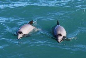 Et les dauphins viennent nous dire bonjour!