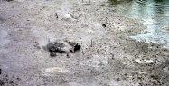 Rotorua: Des bubulles de boue...