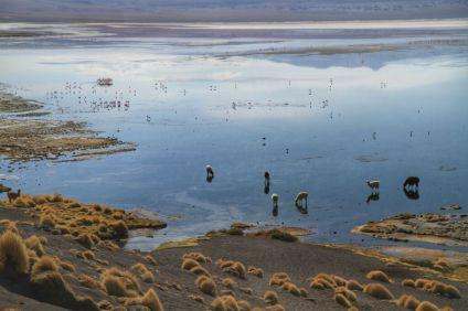 Laguna Colorada, le matin, sans vent, change complètement de couleur