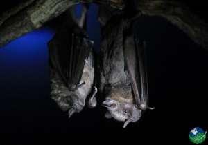 Bat Jungle Tour