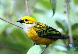 Trogon Lodge Bird