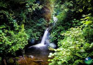 Monteverde Cloud Forest Reserve Waterfall