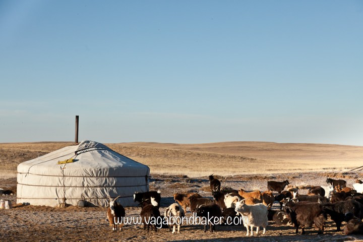 No road signs in the Gobi Desert. Part 4