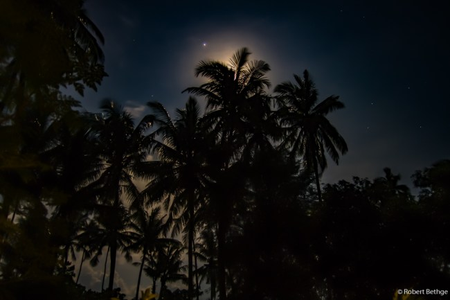 Paradise found: East Bali - Rising full moon behind palm trees photographed from our patio