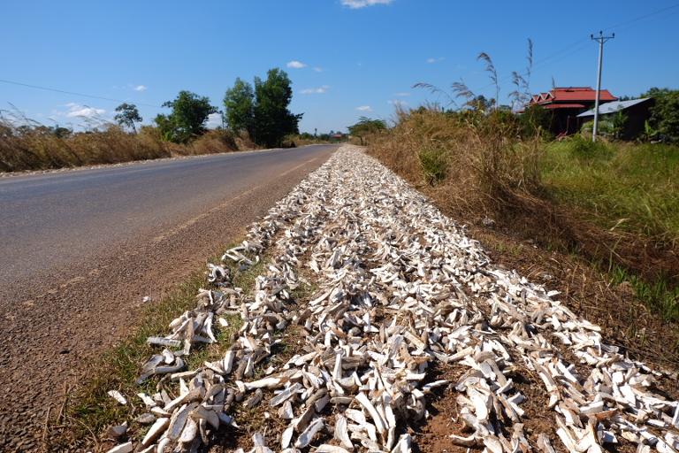 Gedroogde cassave is populair veevoer