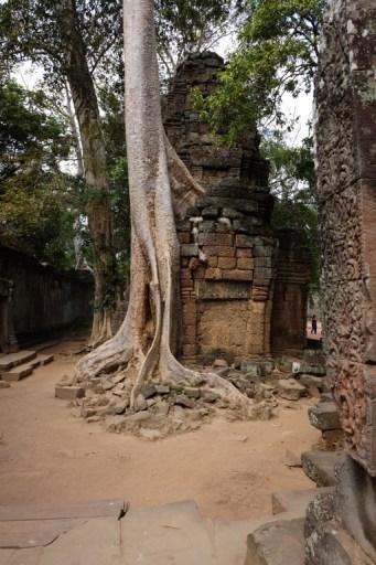 Eén van de tempels is gelaten in de staat waarin ze werden ontdekt: overwoekerd door het oerwoud.
