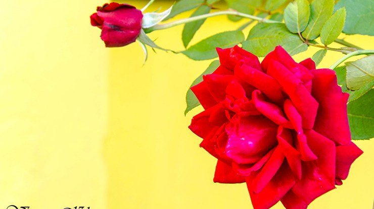 Flower Photography – The Mesmerizing Beauty In Colors