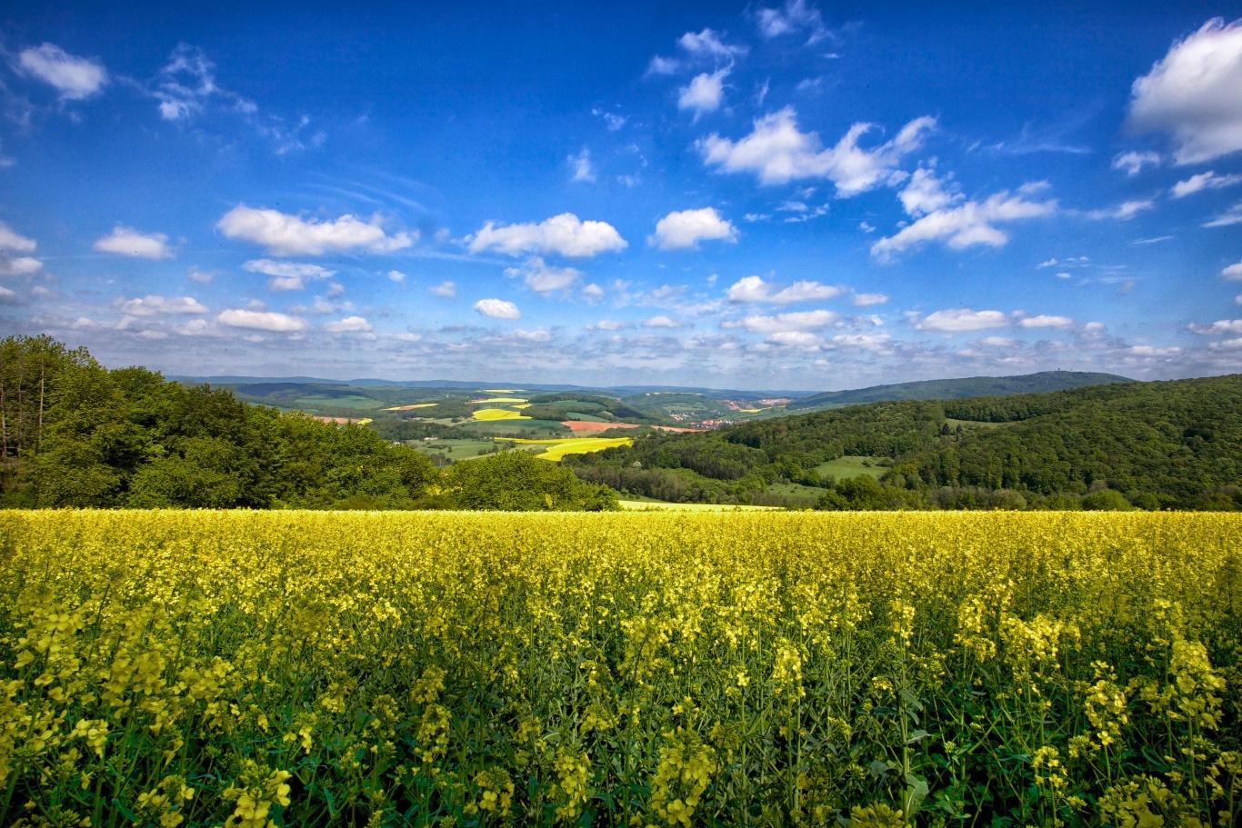Glantal Landscapes w Rapeseed