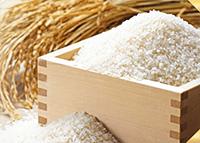 お米由来の乳酸菌