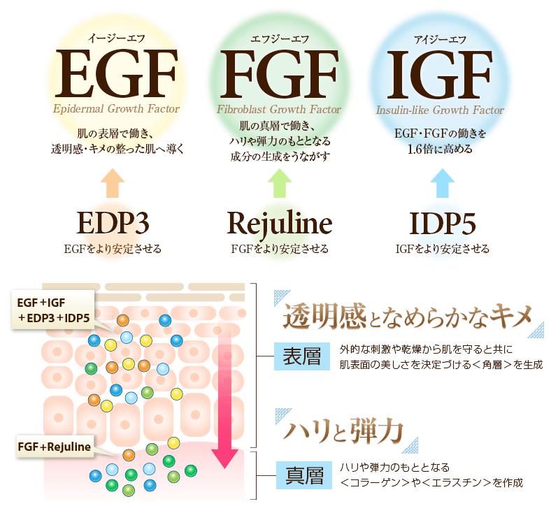 EGF、FGF、IGFの3つの働きで